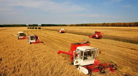 科技兴粮实现粮食产业的新发展 粮产由增数向提质转变