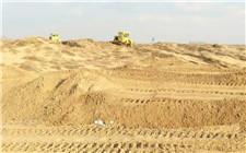 迪拜沙漠长出中国海水稻 最高亩产500公斤