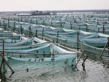 <b>秋季河蟹养殖注意事项,五点需要牢记</b>