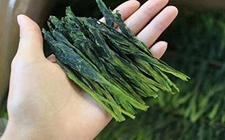联合国发文称:中国为世界茶叶产量的增长做出卓越贡献!