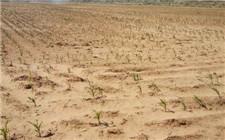 黑龙江省持续高温多地受旱 受旱面积1792万亩