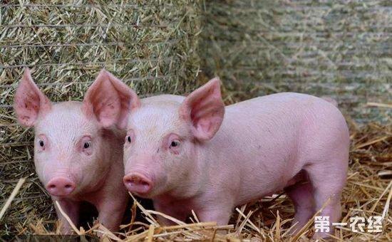 农经网 养猪网 猪病防治       猪水肿病又名猪大肠杆菌病毒血症,俗称