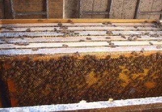 蜜蜂养殖场要怎么消毒?蜜蜂养殖场消毒的方法