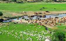 呼伦贝尔市2017年畜牧业发展情况和未来展望