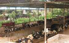 江西新余:畜禽养殖场启动生态化改造