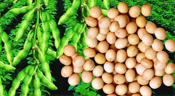 农作物种植有补贴吗?2018年最新国家扶持农作物项目