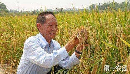 """袁隆平:海水稻""""技术路线图""""已获形成"""