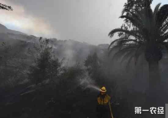 美国多地爆发大规模野火 山火持续肆虐居民紧急撤离