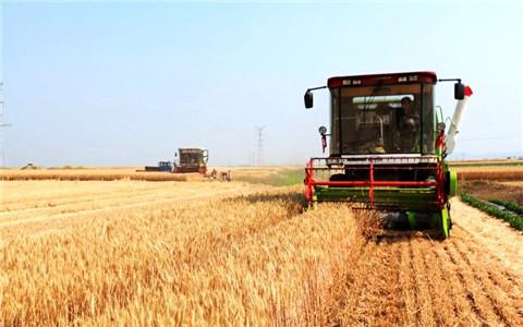 河北冬小麦进入收获期 百万农机齐上阵