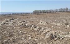 <b>农业农村部:地膜残留造成土地污染 争取2020年地膜当季回收率达80%</b>