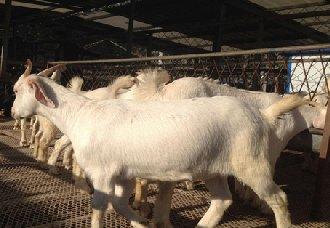 养羊场要有哪些设备?养羊主要设备介绍