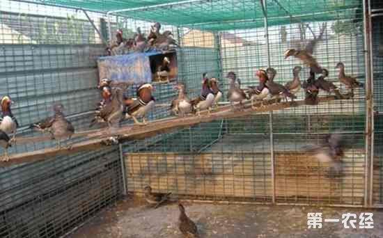 山东平度审查具备《动物防疫条件合格证》场所