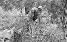 <b>绿色守护者杨秀敏:20年植树60万棵,从此荒山变青山!</b>