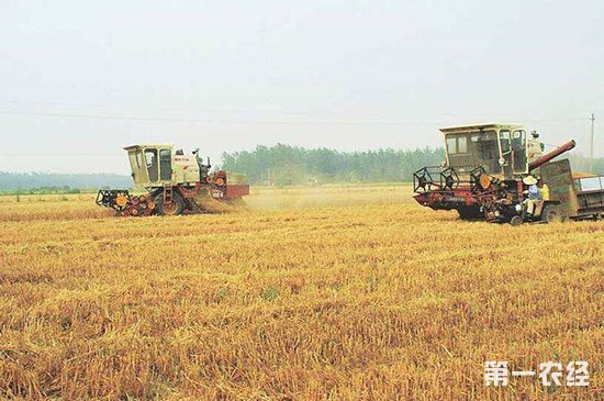 全国冬小麦收割过半 机收比例达94.3%