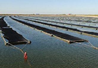 用网箱要怎么养黑鱼?黑鱼网箱的养殖技术
