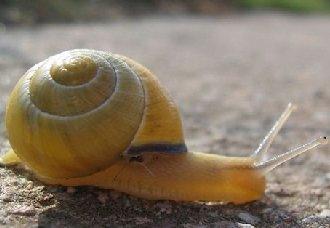 常见的蜗牛有哪些?蜗牛种类介绍