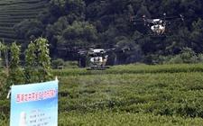 <b>杭州:西湖区龙井茶园开启全域无人机飞防植保</b>