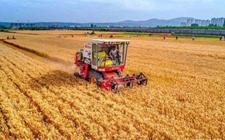 河南:麦收基本结束,今年喜获丰收创纪录!