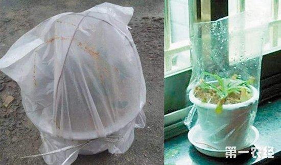 养花技巧:废弃塑料袋的妙用 嫁接保温保湿育苗都能用