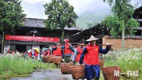 江西铅山举办首届稻作文化节 弘扬中国传统农耕文化