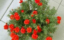 新手养花种什么?适合懒人和养花新手练手的10种花卉植物