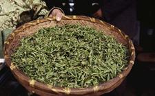 绿茶的保质期一般有多久?绿茶要怎么储存?