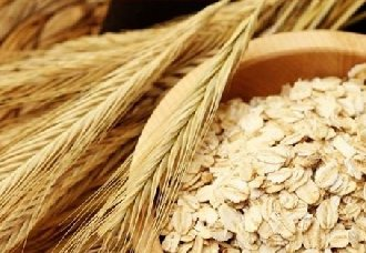 燕麦要怎么栽培?燕麦栽培要点