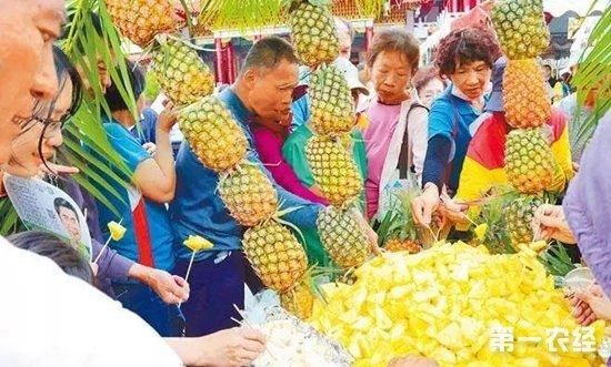 观光客减少又缺乏外销 台湾菠萝滞销价格大跌