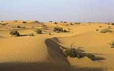 迪拜沙漠种出中国水稻!40年的奋斗终于有了突破
