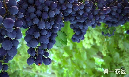 为什么葡萄酒的度数都很低