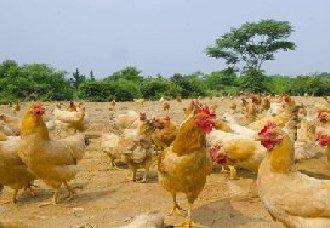 养殖企业既要可持续发展,又要充当环保排头兵