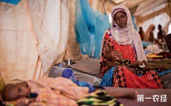 肯尼亚全国一半人口面临粮食短缺问题