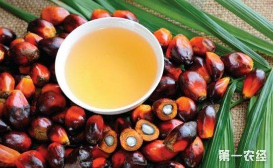 法国农民抗议进口棕榈油 集体封堵炼油厂和油库