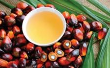 <b>法国农民抗议进口棕榈油 集体封堵炼油厂和油库</b>