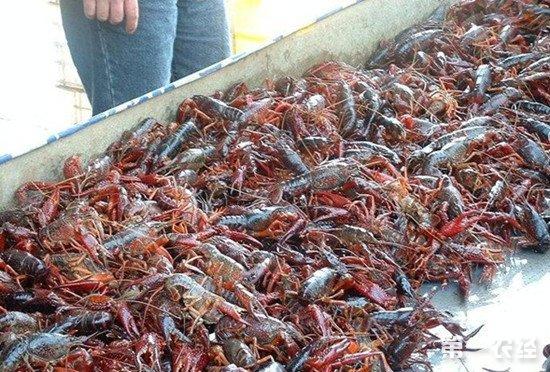 去年我国小龙虾产业爆发式增长83%