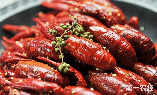 去年我国小龙虾产业爆发式增长83% 产业总值达2685亿元