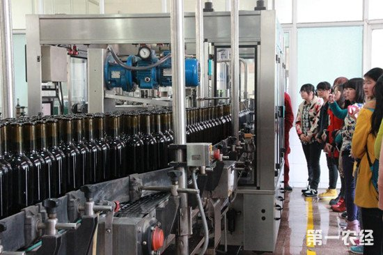 新世界葡萄酒生产