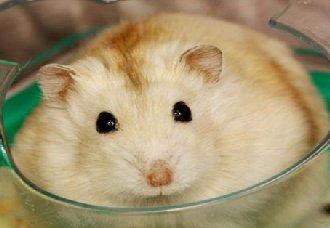 <b>布丁仓鼠吃什么东西?布丁仓鼠喜欢吃的食物</b>
