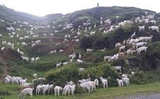 青海省海北门源县开启草地生态畜牧业发展新模式