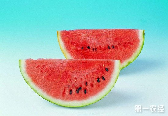 河北省内丘县:私人订制网红西瓜带动农民增收