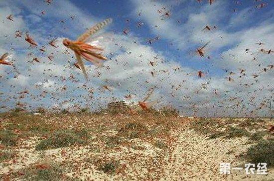 我国多个部门联合召开蝗虫治理专项会议 探讨并部署蝗虫防治工作