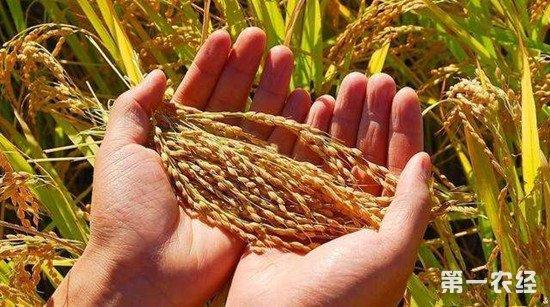 警惕粮食产量担负论 粮食平安不可松开