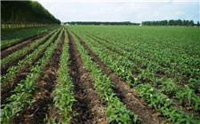 黑龙江大豆补贴每亩高出玉米百元 提升大豆种植面积