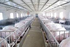 <b>夏天猪病防治技术有哪些?主要防治措施是什么?</b>