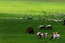 云南屏边县大力发展生态畜牧业加快产业结构调整