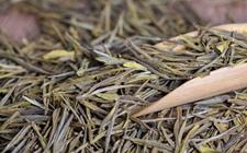 <b>现在做白茶还有机会吗?2018年白茶市场前景如何?</b>