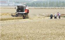 全国夏粮大丰收 农机使用率大幅提高