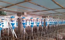 <b>养猪场安装智能化设备,如何进行挑选?</b>