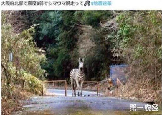 日本大阪地震后假消息满天飞 政府呼吁民众勿散播不实消息