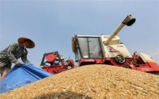 2018年全国小麦跨区机器收割活动基本结束